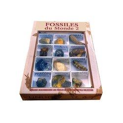Les fossiles du monde